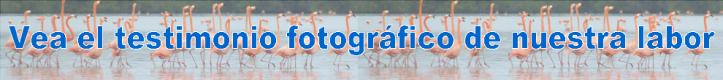 Azul-Ambientalistas-Banner-Galeria-Fotografica