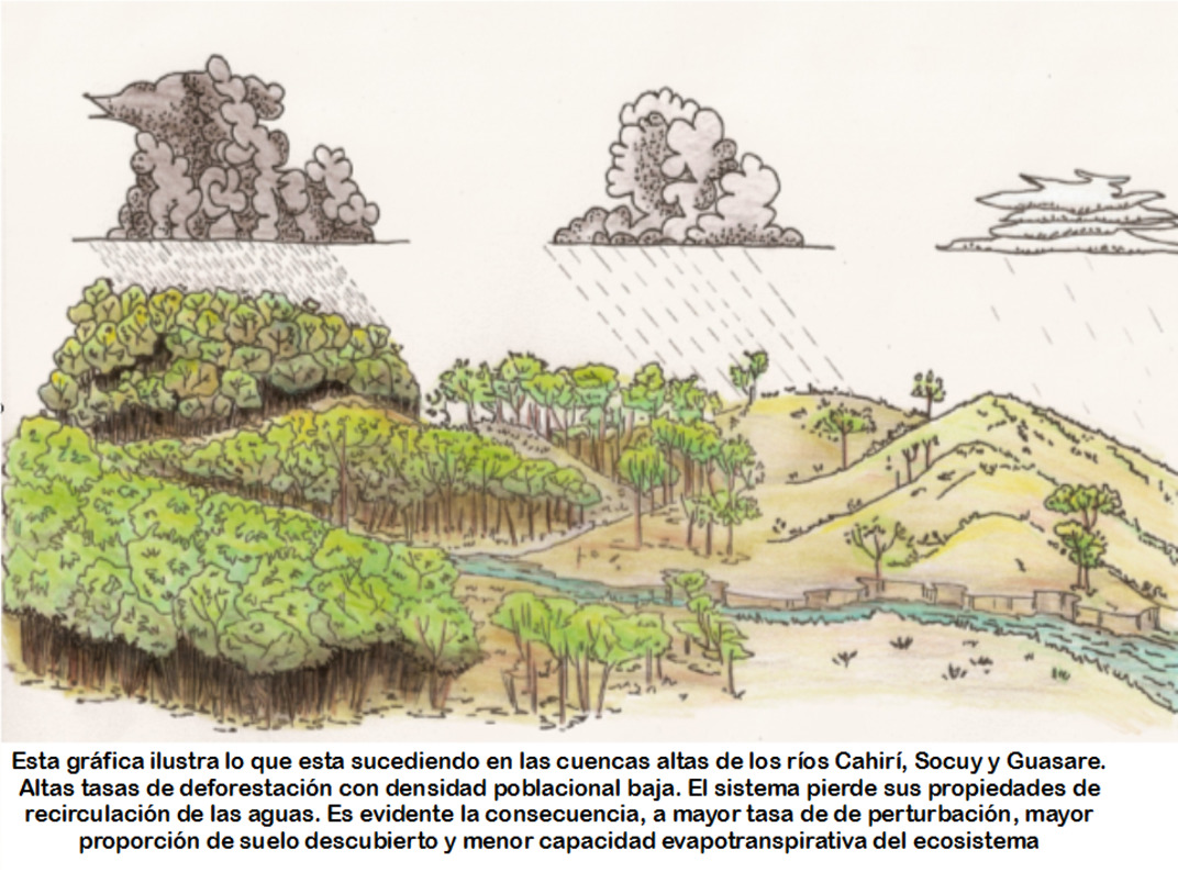 90-por-ciento-de-Deforestacion-en-el-Zulia-06