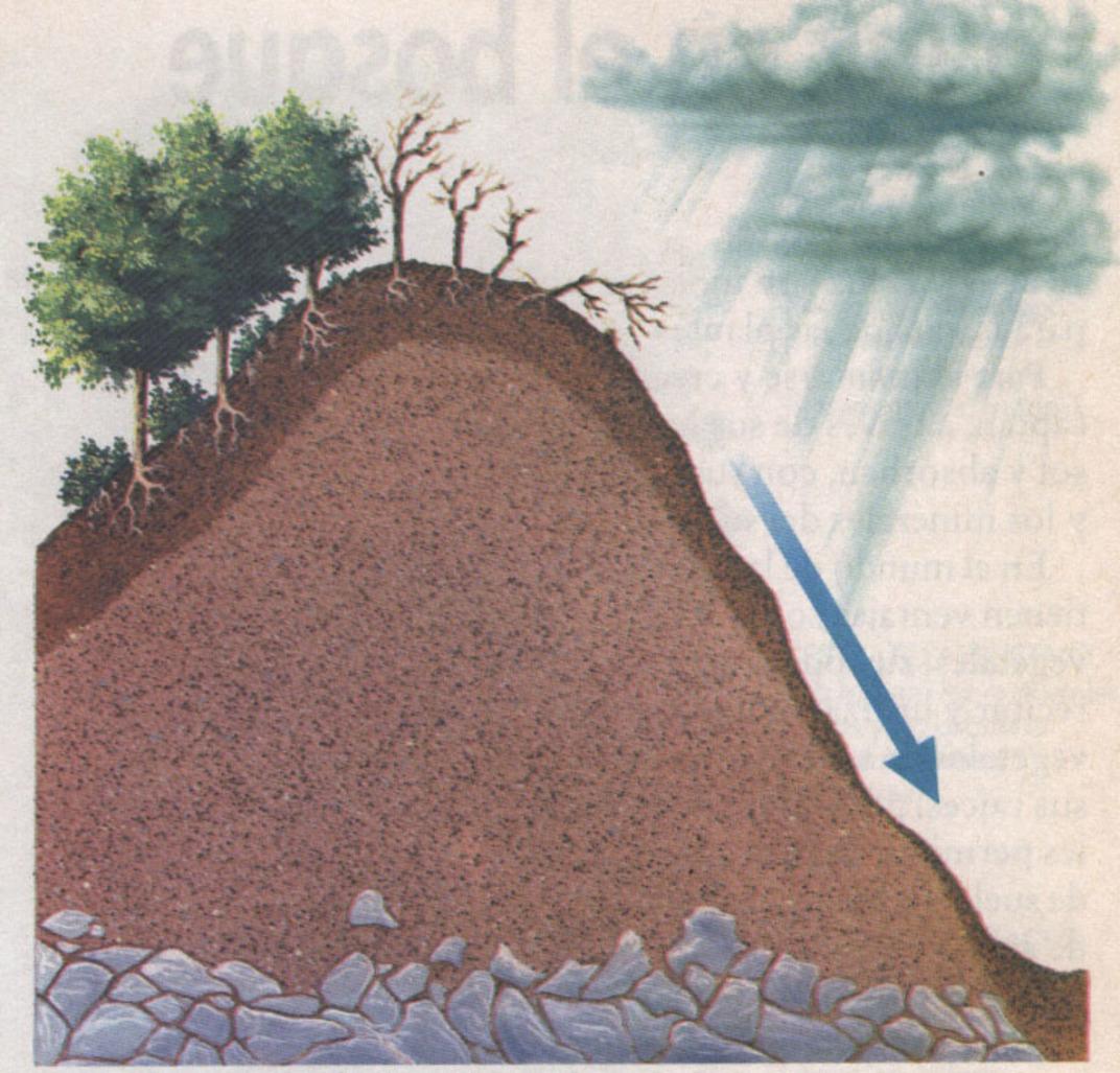 Degradación de los Suelos por Deforestación
