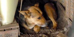 05 China, La Perra Argentina Adopta a una Bebe Abandonada