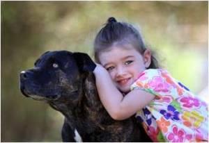10 Roary, El Perro Australiano Salvador
