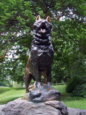 11 Balto, El Perro Heroe de Alaska