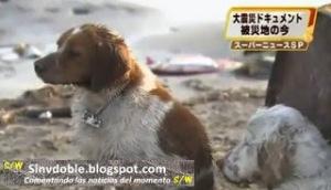 13 Solidaridad Canina desde Japón