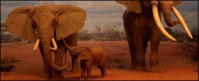 A9-estampida-de-elefantes