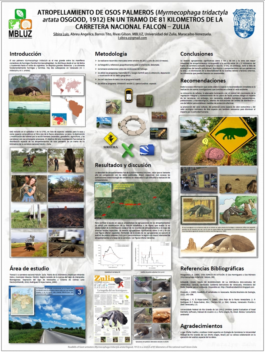 12-atropellamiento-de-osos-palmeros-en-un-tramo-de-81-kilometros-de-la-carretera-nacional-falcon-zulia